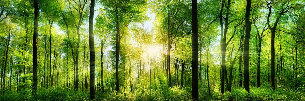 Dział ochrony środowiska w dziale klejów